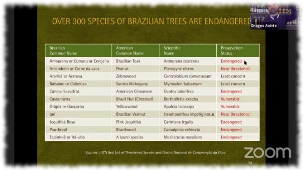 Brasilianische Holzarten und ihre Gefährdung